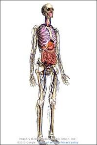 عجایب بدن انسان