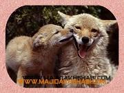 هنر عکاسي: عشق مادری حیوانات