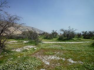 گل های بابونه و دیوار های مسجد جامع