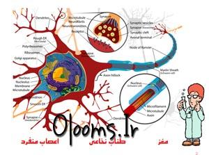 پاورپوينت ساختمان دستگاه عصبي انسان علوم هشتم