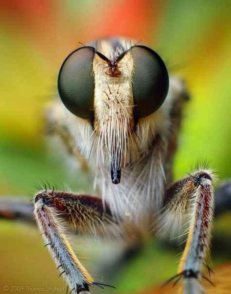 دنیای ماکرو از دریچهی دوربین توماس شاهان