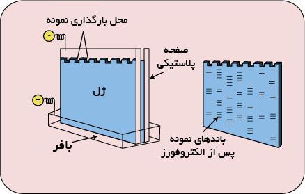 اجزای الکتروفورز