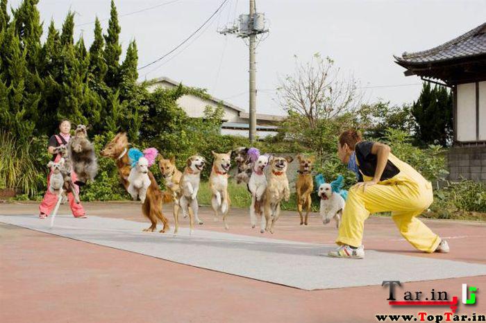 بیشترین پرش تعداد سگ از روی طناب