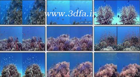 coral wonderland 3d hsbs | سرزمین عجایب مرجان ها سه بعدی