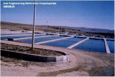 بیوسکیوریتی (امنیت زیستی) در مزارع آبزی پروری