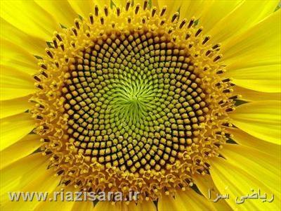 www.riazisara.ir          وبسایت ریاضی سرا