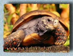 هنر عکاسي: لاکپشت ها