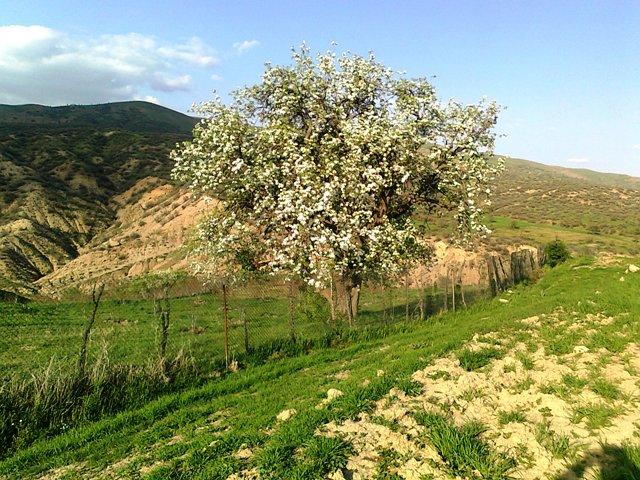 روستای ژیریان