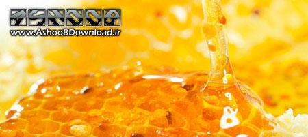روش های تشخیص عسل طبیعی و تقلبی | www.AshooBDownload.ir
