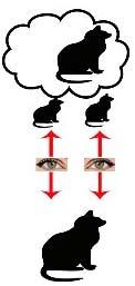 بینایی چشم طبیعی