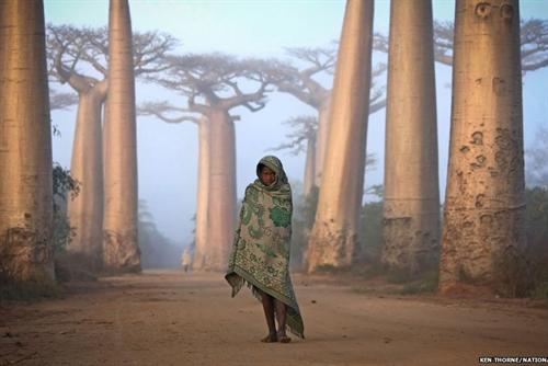 برندگان جایزه عکاسی نشنال جئوگرافیک: سفر