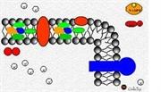تبدیل انرژی نوری به شیمیایی در فتوسنتز