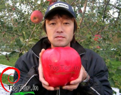 عکس سنگین ترین سیب جهان