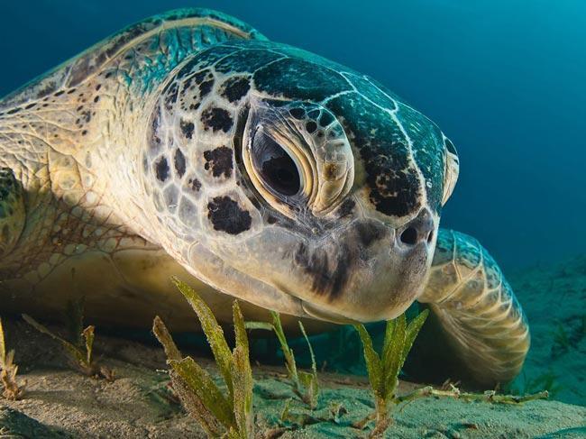 تصویری زیبا از یک لاک پشت دریایی