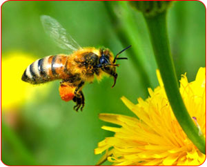 وحی بر زنبور عسل