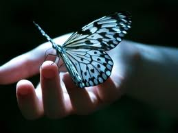 www.ysame.ir-تصاویر پروانه,پروانه,عکس پروانه,پروانه عاشق