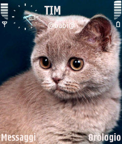 عکس   دانلود تم Little Cat سیرجان ۲ دانلود برای سیمبیان سری 60 ورژن 3