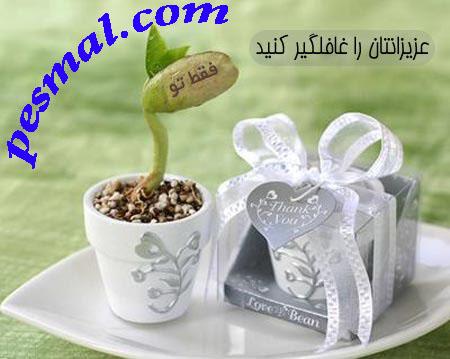 خرید لوبیای سحر آمیز