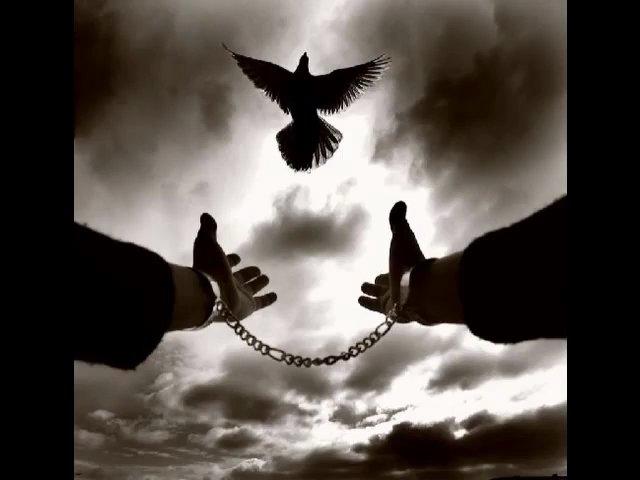 آزادی و اسارت