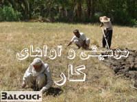 موسیقی و آوا های کار دربلوچستان