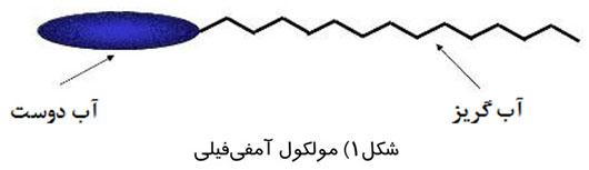 مولکول آمفی فیلی