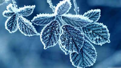 زمستان + والپیپر + hd + برگ یخ زده