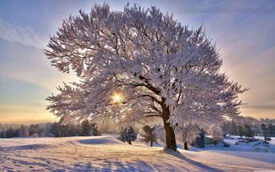hd + والپیپیر + طبیعت + زمستان + عکس باکیکفیت + روز آفتابی در زمستان