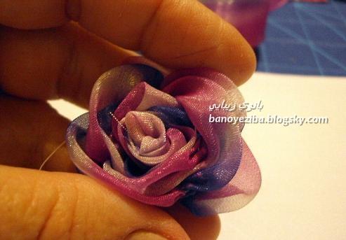 گل رز زیبای روبانی