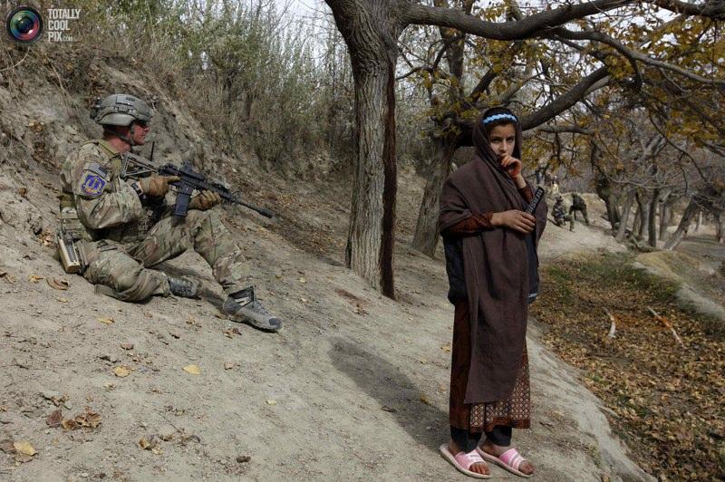 عکس خروس جنگی افغانی