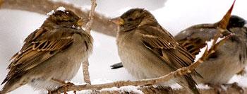 پرندگان را دریابیم