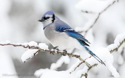 hd + والپیپیر + طبیعت + زمستان + عکس باکیکفیت + عکس پرنده + گنجشک در روز زمستانی + bird + winter