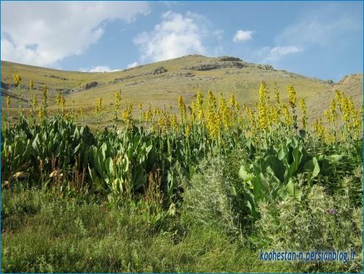 چشمه پیازچال