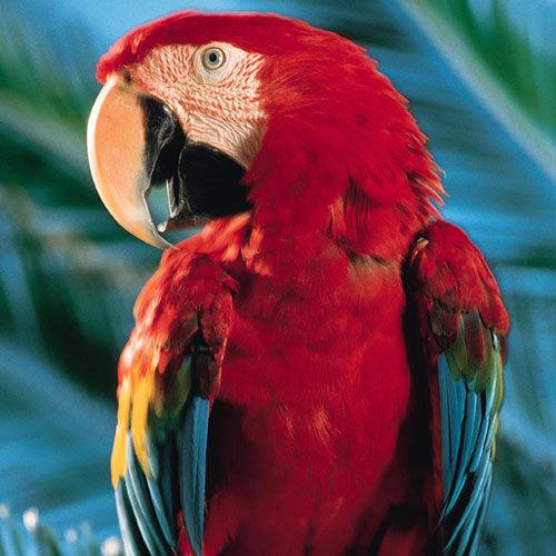 colorful parrot - طوطی رنگارنگ