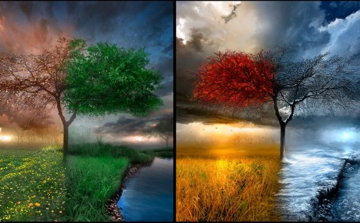 four seasons tree - درخت چهار فصل سال