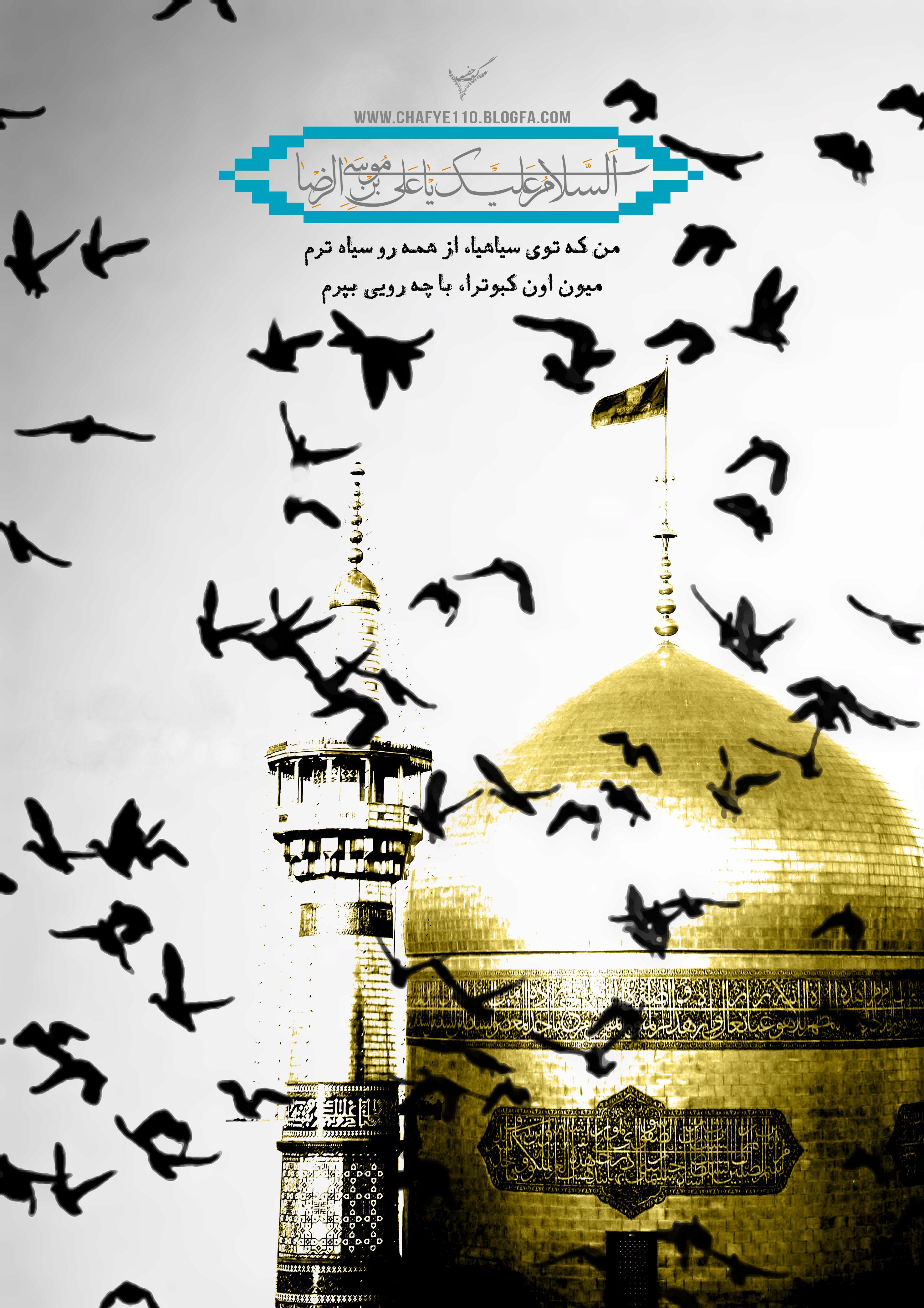 عکس کبوتر حرم امام حسین