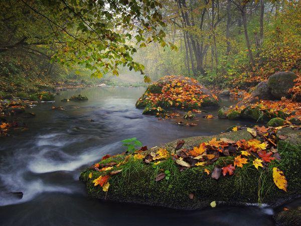 http://s3.picofile.com/file/7948101719/autumn_colors_27164_600x450.jpg