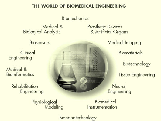 The World of Biomedical Engineering