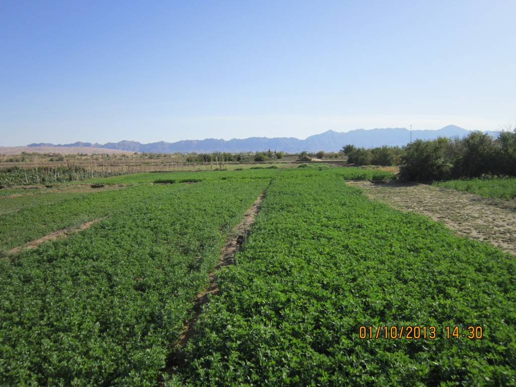 طبیعت زیبای دشت و صحرای سرسبز روستای مصر