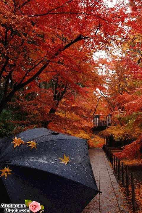 عکس باران پاییزی عاشقانه