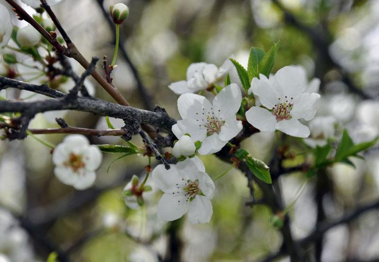 برگ گل