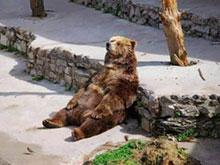 عکس خرس تنبل