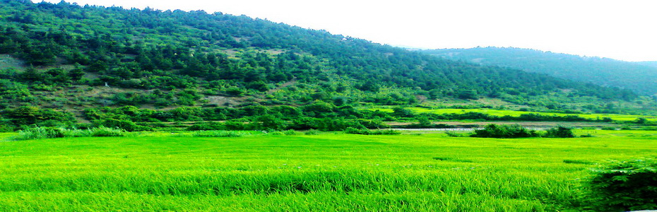 به روستای دشتویل؛ روستای شالیزارهای پلکانی و درختان همیشه سرسبز زربین خوش آمدید...