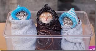 http://s3.picofile.com/file/8190946392/kitten.jpg