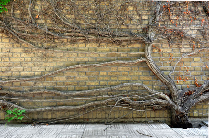 درخت تنها