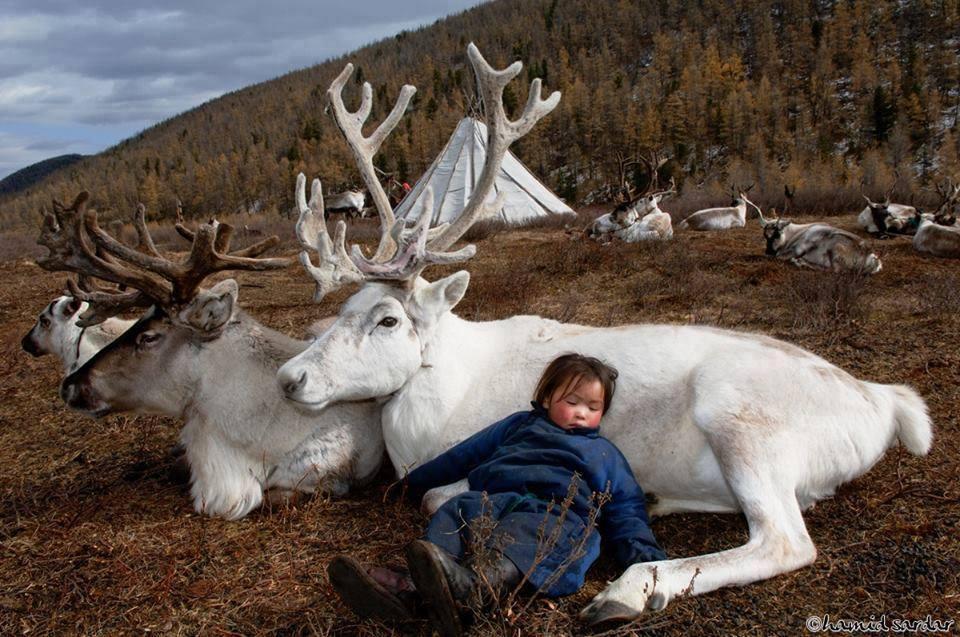 عکس بچه مغولستانی با حیوانات گرانبها،عکس های زیبا از طبیعت مغولستان،عکس با گوزن،عکس گوزن،عکس بچه،عکس گوزن سفید و زیبا