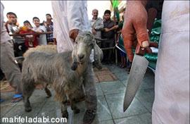 عکس قربانی کردن گوسفند