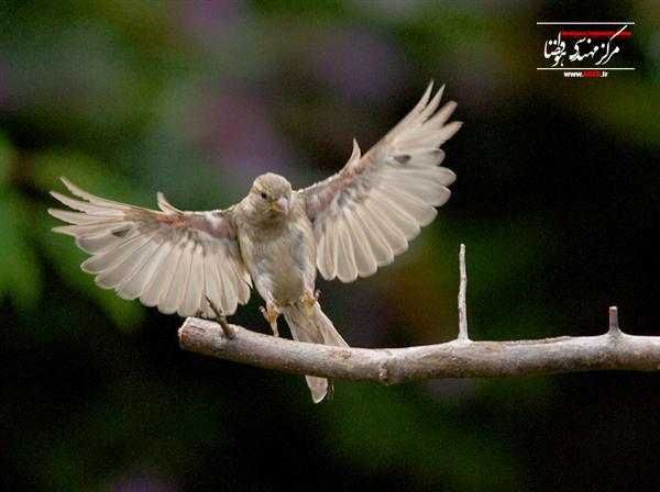 ساختار بال پرنده (بالزن ۲)