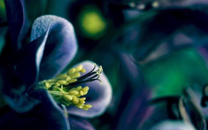 بک گراندهای زیبا از گل ها