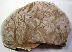 نقاشی زیبا بر روی قارچ! , جالب و خواندنی