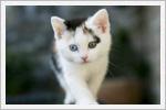 تصاویر با کیفیت از گربه های خوشگل و بامزه